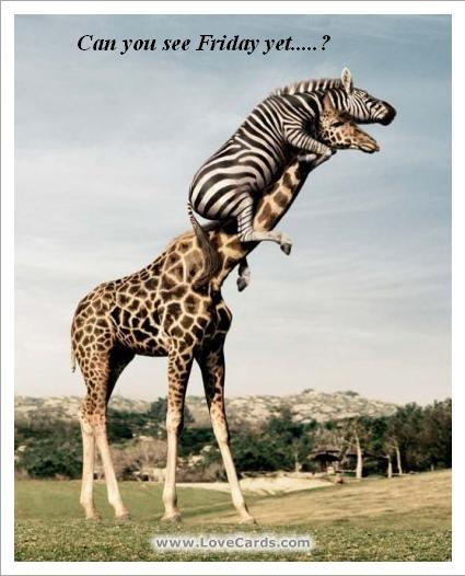 I Am Giraffe Game Friday Funny :-)   iLi...