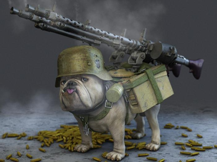Friday funny man s best friend ilife journey - Pictures of funny animals with guns ...