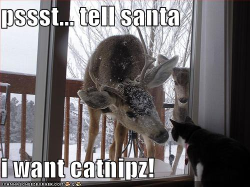 http://ilifejourney.files.wordpress.com/2011/12/funny-pictures-cat-wants-catnip-for-christmas.jpg