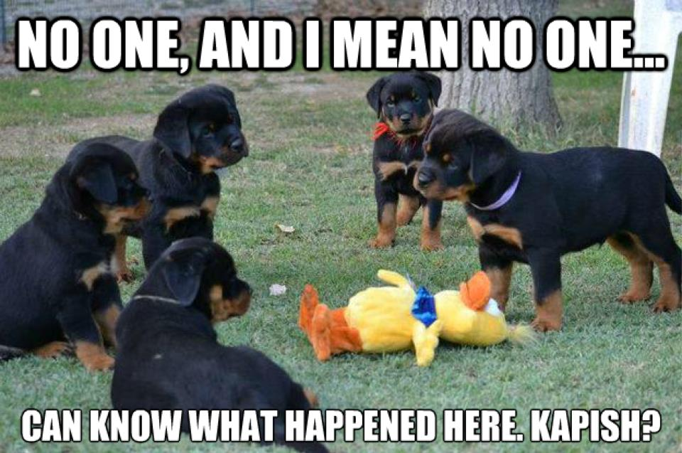 Friday Funny! ;-)  No one can know...