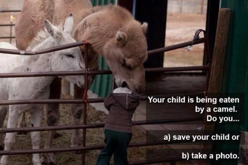Camel eating child