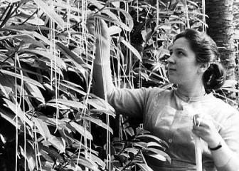 'Spaghetti Harvesting'