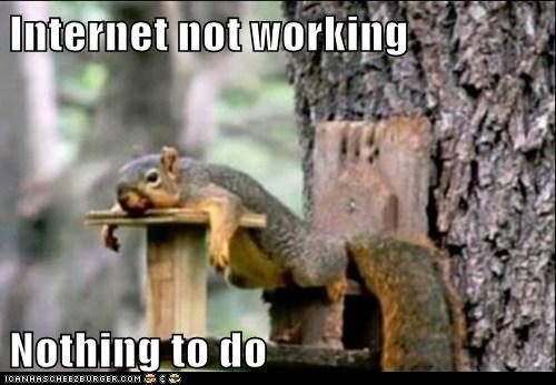Squirrel - no internet