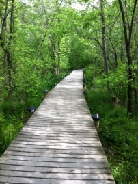 Deck into the woods