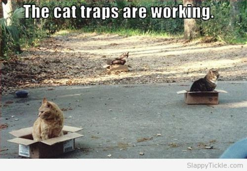 cat-traps-are-working