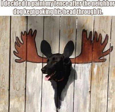 Dog and painted fence