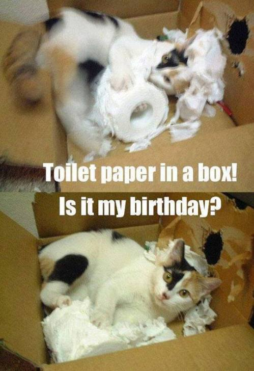 Toilet paper and cat in box