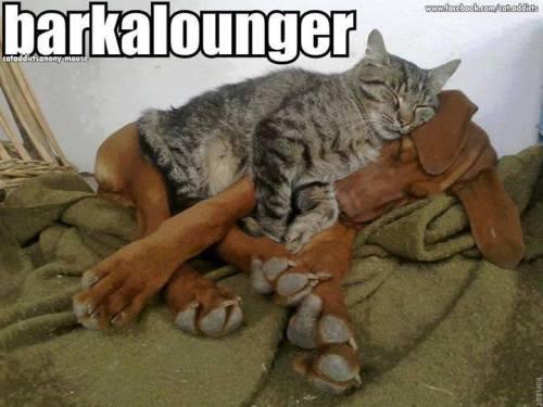 Barkalounger