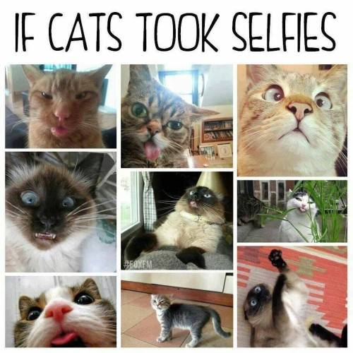 Cats - selfies